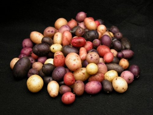 Examples of red and purple pigments found in the tuber skin.