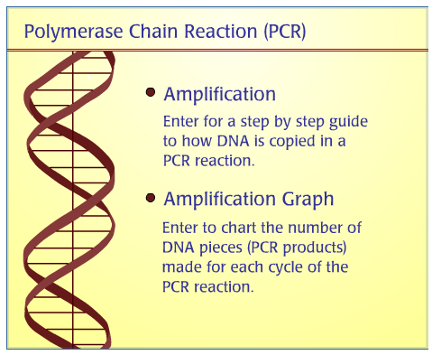 Screenshot of the introdction to the PCR animation at the Dolan DNA Learning Center